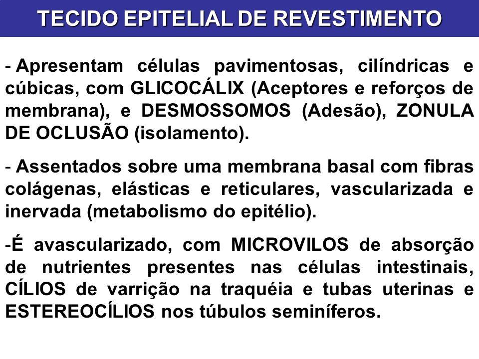 TECIDO EPITELIAL DE REVESTIMENTO - Apresentam células pavimentosas, cilíndricas e cúbicas, com GLICOCÁLIX (Aceptores e reforços de membrana), e DESMOS