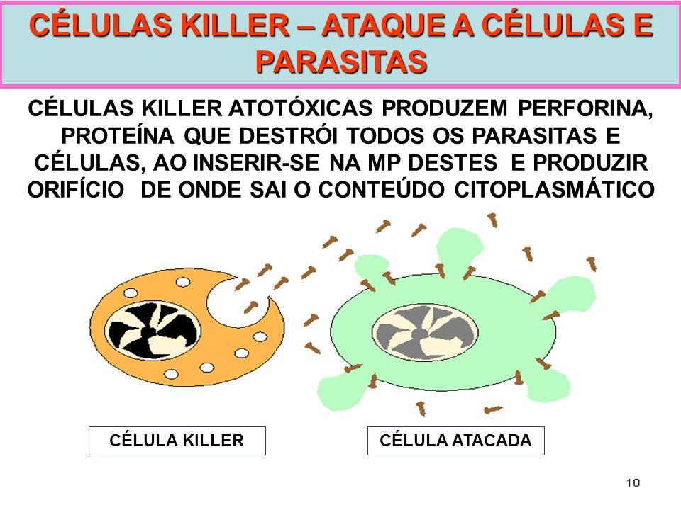 CÉLULAS KILLER ATOTÓXICAS PRODUZEM PERFORINA, PROTEÍNA QUE DESTRÓI TODOS OS PARASITAS E CÉLULAS, AO INSERIR-SE NA MP DESTES E PRODUZIR ORIFÍCIO DE OND