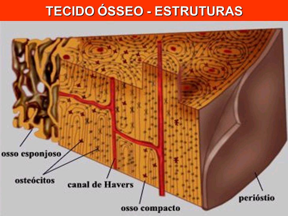 TECIDO ÓSSEO - ESTRUTURAS