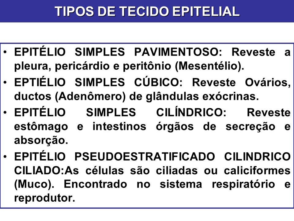 TIPOS DE TECIDO EPITELIAL EPITÉLIO SIMPLES PAVIMENTOSO: Reveste a pleura, pericárdio e peritônio (Mesentélio). EPTIÉLIO SIMPLES CÚBICO: Reveste Ovário
