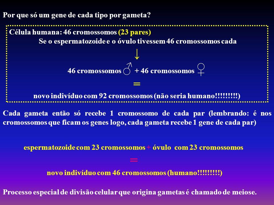 Por que só um gene de cada tipo por gameta? Célula humana: 46 cromossomos (23 pares) Se o espermatozoide e o óvulo tivessem 46 cromossomos cada 46 cro