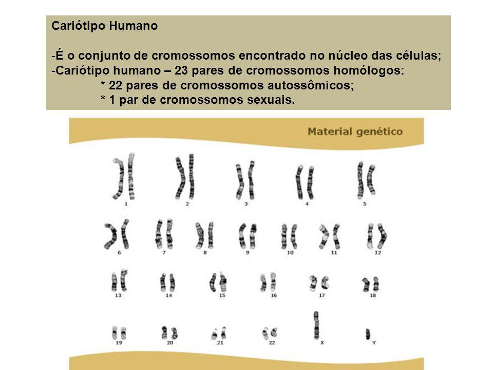 Cariótipo Humano -É o conjunto de cromossomos encontrado no núcleo das células; -Cariótipo humano – 23 pares de cromossomos homólogos: * 22 pares de c
