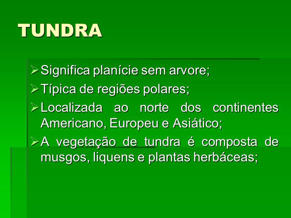 TUNDRA Significa planície sem arvore; Significa planície sem arvore; Típica de regiões polares; Típica de regiões polares; Localizada ao norte dos con