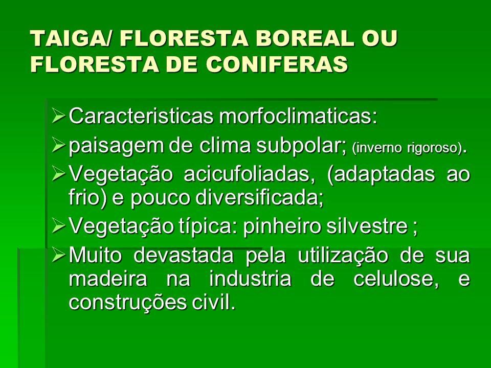 TAIGA/ FLORESTA BOREAL OU FLORESTA DE CONIFERAS Caracteristicas morfoclimaticas: Caracteristicas morfoclimaticas: paisagem de clima subpolar; (inverno