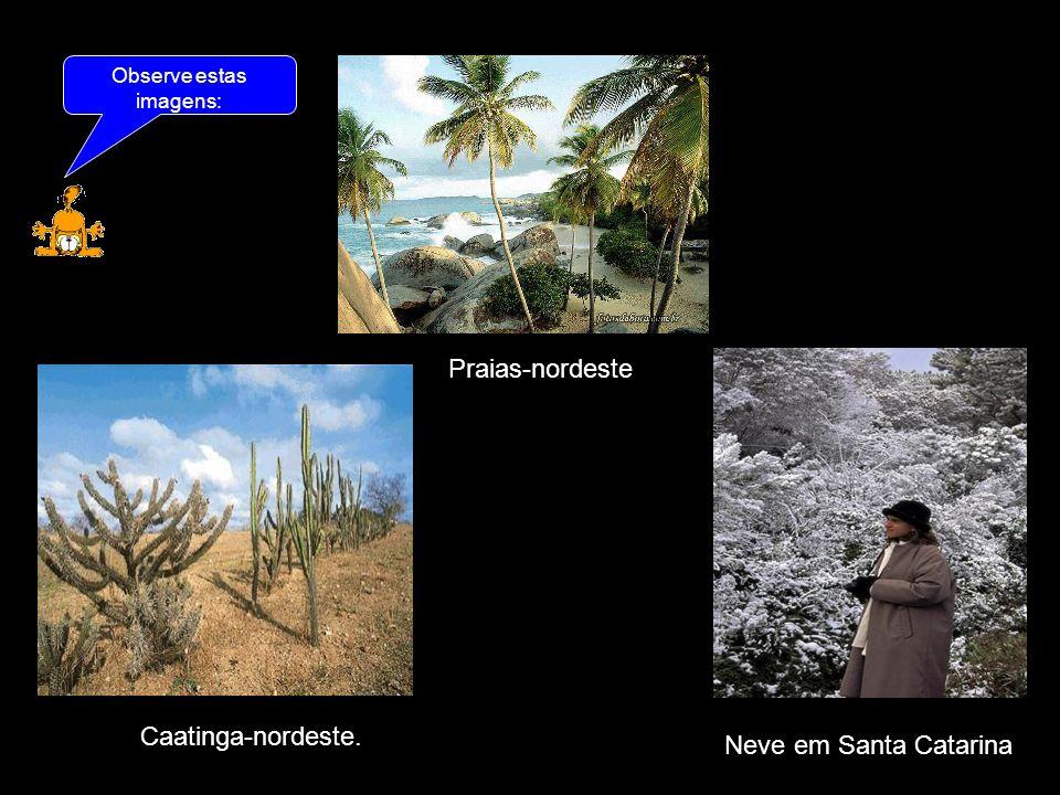 As imagens retratam diferentes paisagens, que resultaram dos diferentes tipos de clima existente em nosso país.
