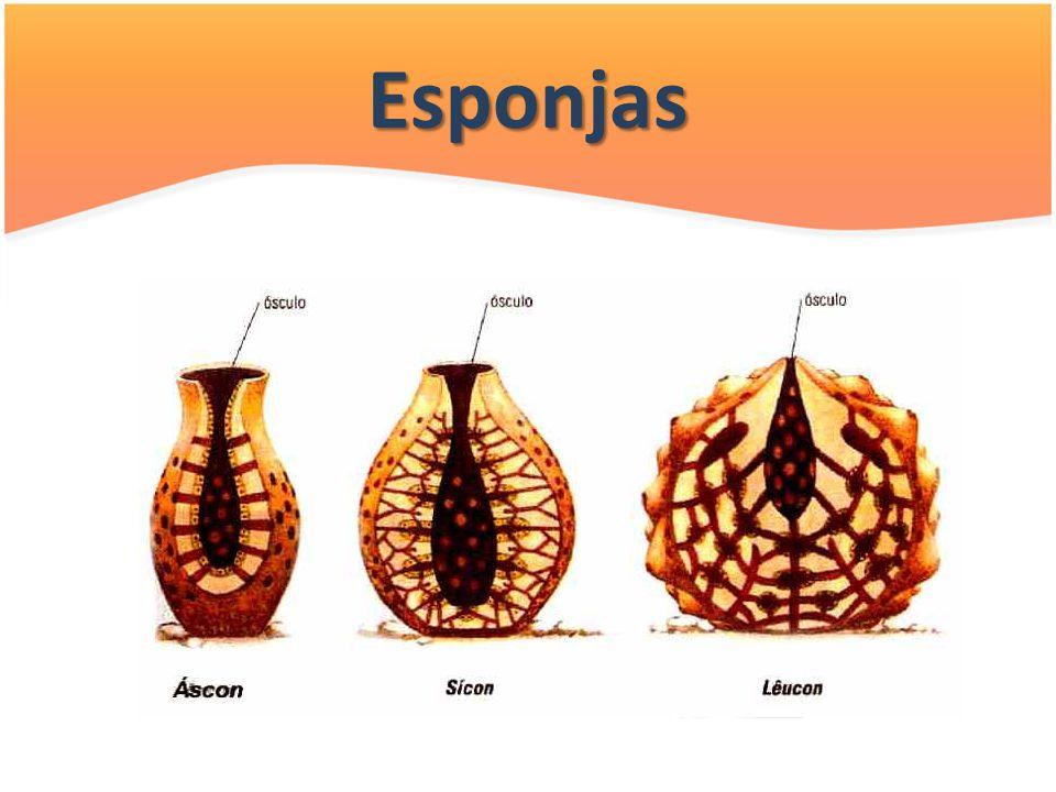 Esponjas