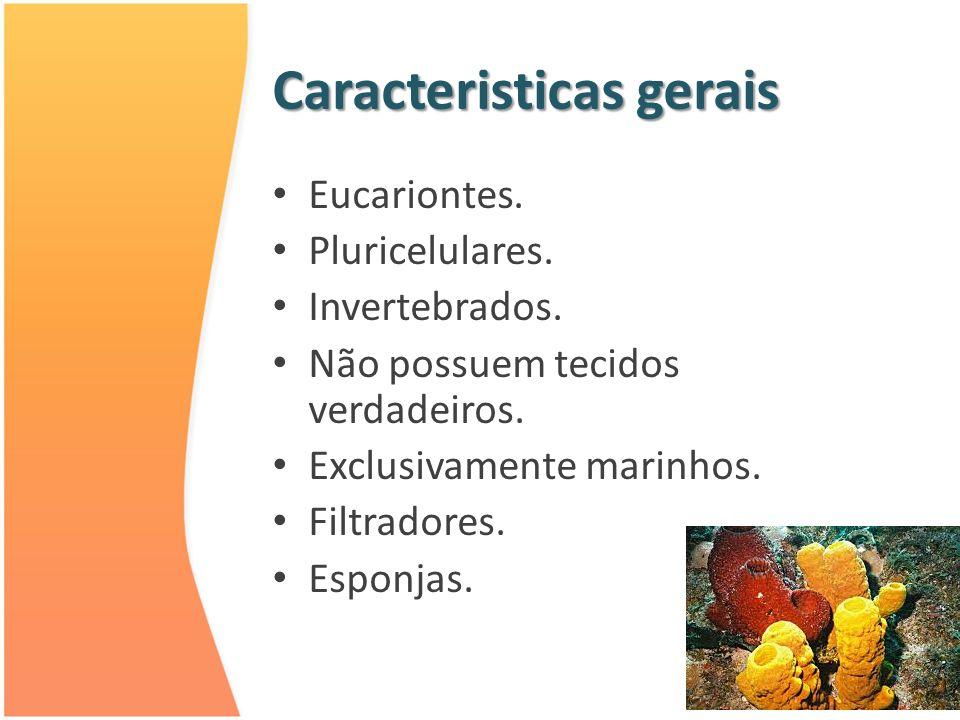 Caracteristicas gerais Eucariontes. Pluricelulares. Invertebrados. Não possuem tecidos verdadeiros. Exclusivamente marinhos. Filtradores. Esponjas.