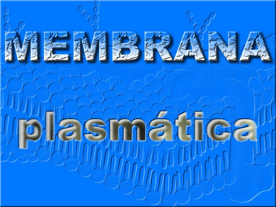ENVOLTÓRIOS CELULARES MEMBRANA PLASMÁTICA Funções Proteção Permeabilidade Seletiva Composição Química Lipídeos Proteínas Propriedades Elasticidade Regeneração