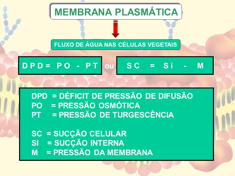 FLUXO DE ÁGUA NAS CÉLULAS VEGETAIS D P D = P O - P TS C = S i -M MEMBRANA PLASMÁTICA ou DPD = DÉFICIT DE PRESSÃO DE DIFUSÃO PO = PRESSÃO OSMÓTICA PT =