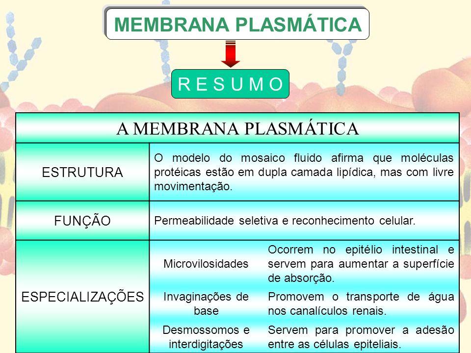 A MEMBRANA PLASMÁTICA ESTRUTURA O modelo do mosaico fluido afirma que moléculas protéicas estão em dupla camada lipídica, mas com livre movimentação.
