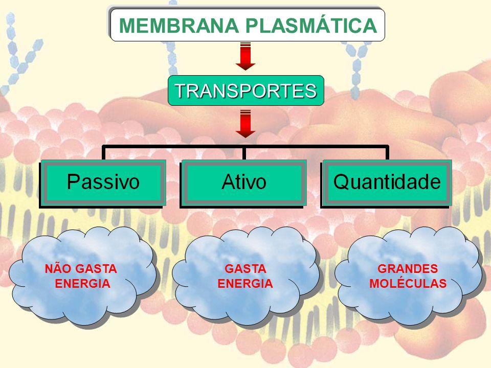 MEMBRANA PLASMÁTICA TRASPORTE EM QUANTIDADE ENDOCITOSE EXOCITOSE FAGOCITOSE PINOCITOSE CLASMOCITOSE GRANDES MOLÉCULAS ENGLOBAMENTO ELIMINAÇÃO RESÍDUOS LÍQUIDOSSÓLIDOS