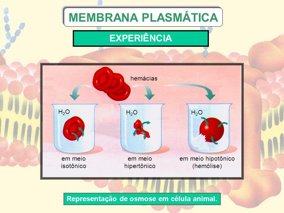 H2OH2O H2OH2OH2OH2O hemácias em meio isotônico em meio hipertônico em meio hipotônico (hemólise) Representação de osmose em célula animal. MEMBRANA PL