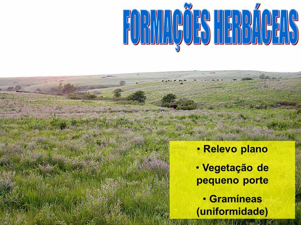 Relevo plano Vegetação de pequeno porte Gramíneas (uniformidade)