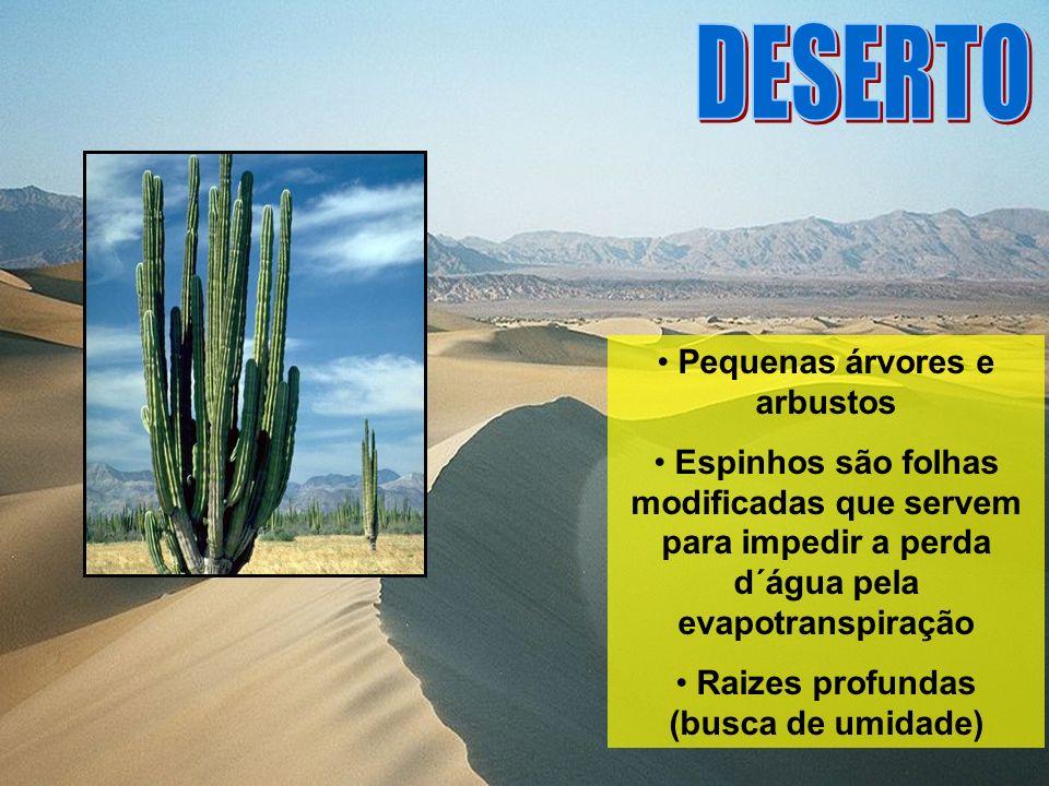 Pequenas árvores e arbustos Espinhos são folhas modificadas que servem para impedir a perda d´água pela evapotranspiração Raizes profundas (busca de u