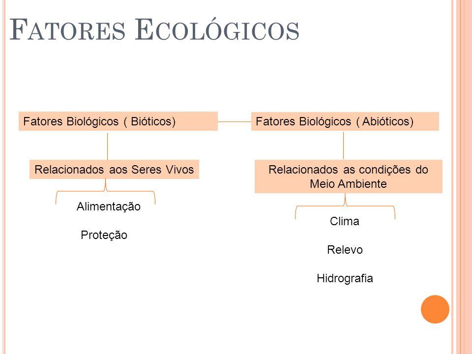 Á GUA Hidrófilos ou hidrófitos vegetais que só vivem em locais com muita água Xerófilos ou xerófitos vegetais adaptados a locais com pouca água Vitória- régia Cacto