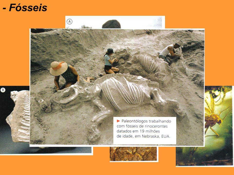 - Fósseis