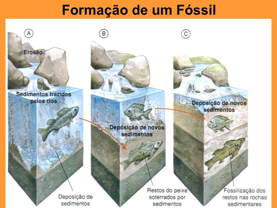 Formação de um Fóssil
