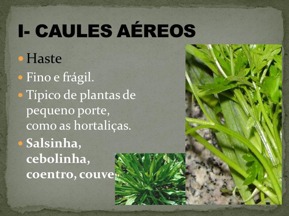 Haste Fino e frágil.Típico de plantas de pequeno porte, como as hortaliças.