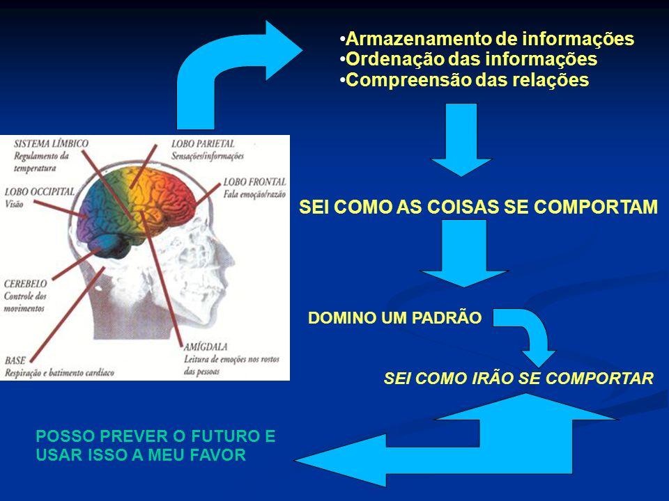 Armazenamento de informações Ordenação das informações Compreensão das relações SEI COMO AS COISAS SE COMPORTAM DOMINO UM PADRÃO SEI COMO IRÃO SE COMP