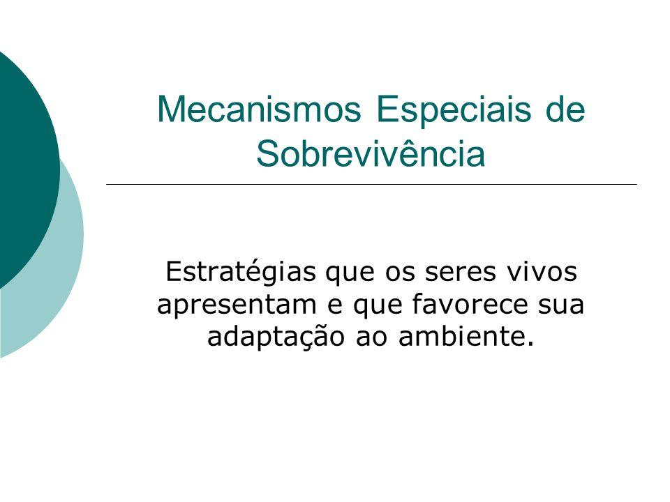 CAMUFLAGEM: mimetismo X cripcia Mimetismo: o animal se faz parecer com outro ser vivo (IMITA).