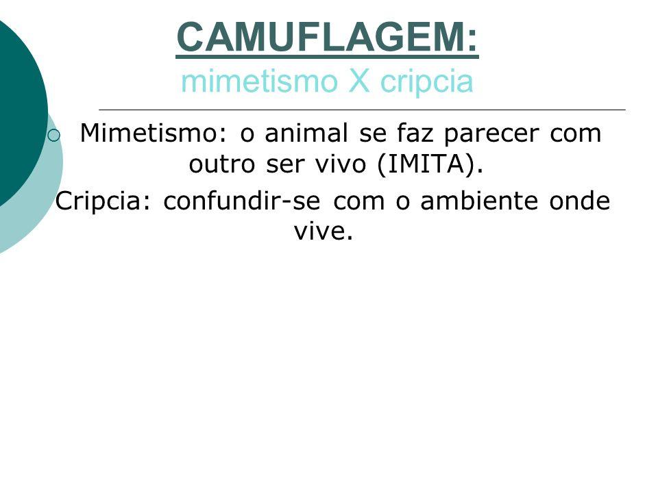 CAMUFLAGEM: mimetismo X cripcia Mimetismo: o animal se faz parecer com outro ser vivo (IMITA). Cripcia: confundir-se com o ambiente onde vive.