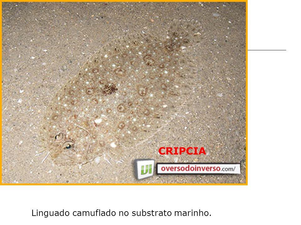 Linguado camuflado no substrato marinho.