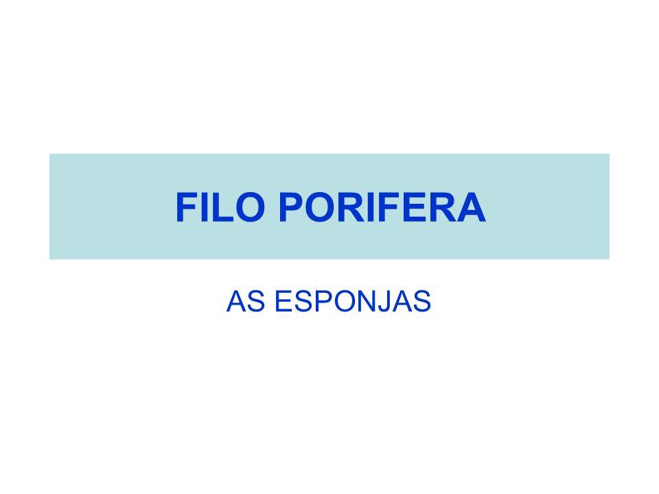 FILO PORIFERA AS ESPONJAS