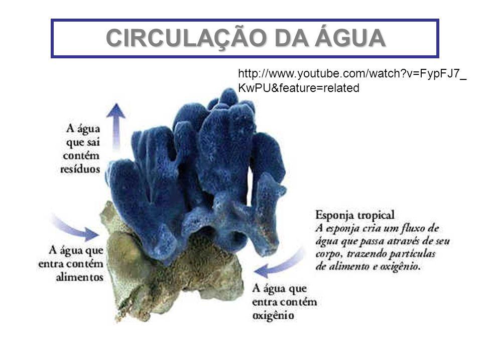 CIRCULAÇÃO DA ÁGUA http://www.youtube.com/watch?v=FypFJ7_ KwPU&feature=related