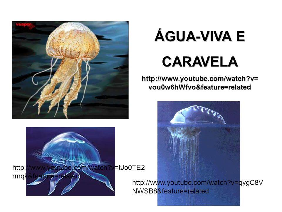 ÁGUA-VIVA E CARAVELA http://www.youtube.com/watch?v= vou0w6hWfvo&feature=related http://www.youtube.com/watch?v=qygC8V NWSB8&feature=related http://www.youtube.com/watch?v=tJo0TE2 rmqk&feature=related