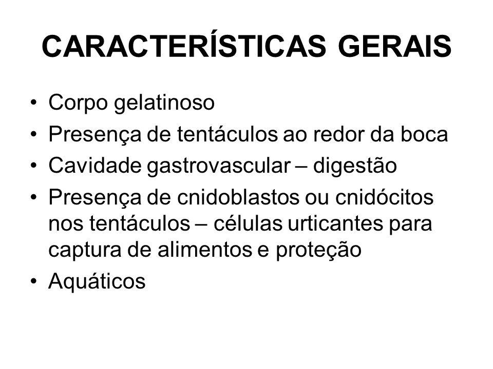 CARACTERÍSTICAS GERAIS Corpo gelatinoso Presença de tentáculos ao redor da boca Cavidade gastrovascular – digestão Presença de cnidoblastos ou cnidócitos nos tentáculos – células urticantes para captura de alimentos e proteção Aquáticos