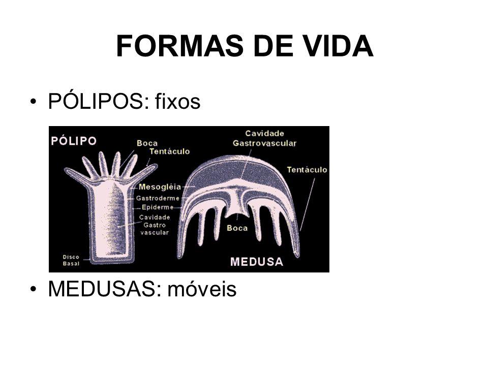 FORMAS DE VIDA PÓLIPOS: fixos MEDUSAS: móveis