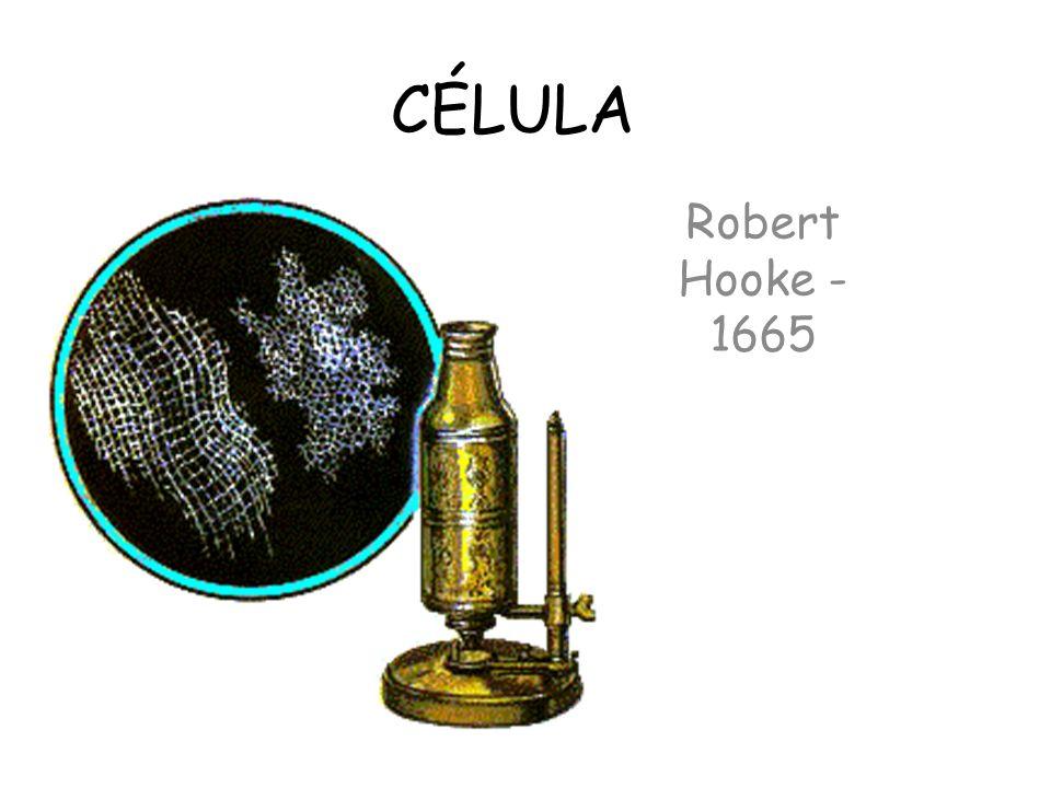 Teoria Celular Moderna: -Todos os seres vivos são formados por células; -A célula é a unidade Morfo-Fisiológica dos seres vivos; -Toda célula surge de outra pré- existente.