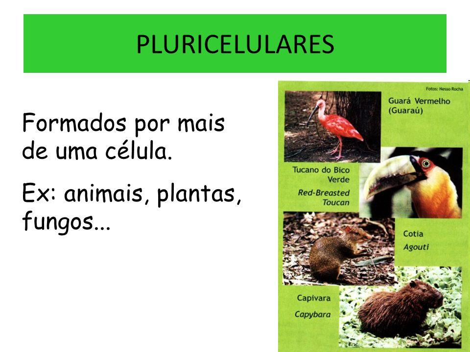 PLURICELULARES Formados por mais de uma célula. Ex: animais, plantas, fungos...