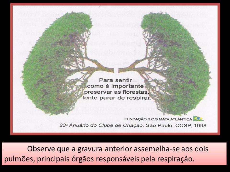 Observe que a gravura anterior assemelha-se aos dois pulmões, principais órgãos responsáveis pela respiração.