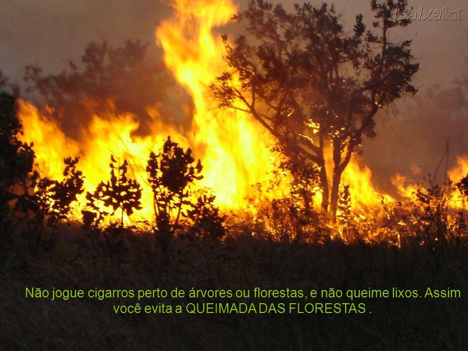 Não jogue cigarros perto de árvores ou florestas, e não queime lixos. Assim você evita a QUEIMADA DAS FLORESTAS.