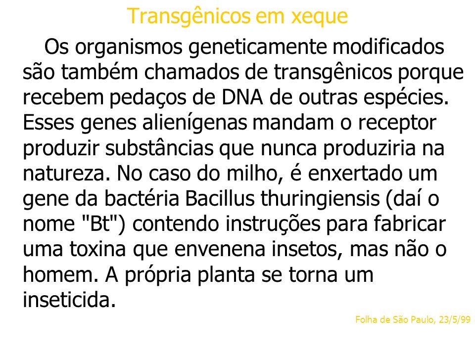Transgênicos em xeque Os organismos geneticamente modificados são também chamados de transgênicos porque recebem pedaços de DNA de outras espécies. Es