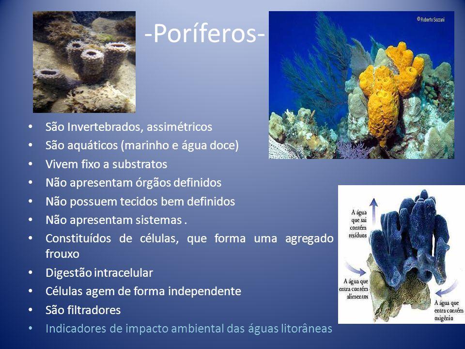 Espécime de Radiospongilla amazonensis: Estudo realizado no Delta do Jacuí.