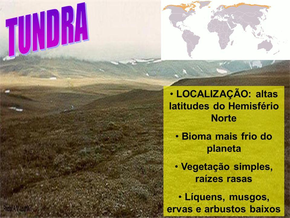 LOCALIZAÇÃO: altas latitudes do Hemisfério Norte Bioma mais frio do planeta Vegetação simples, raízes rasas Líquens, musgos, ervas e arbustos baixos