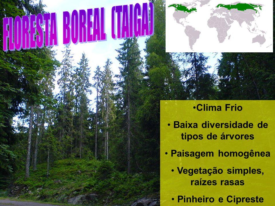 Clima Frio Baixa diversidade de tipos de árvores Paisagem homogênea Vegetação simples, raízes rasas Pinheiro e Cipreste