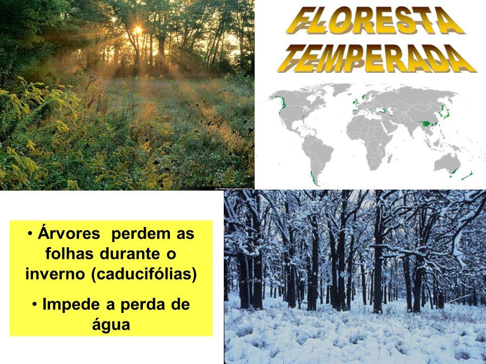 Árvores perdem as folhas durante o inverno (caducifólias) Impede a perda de água