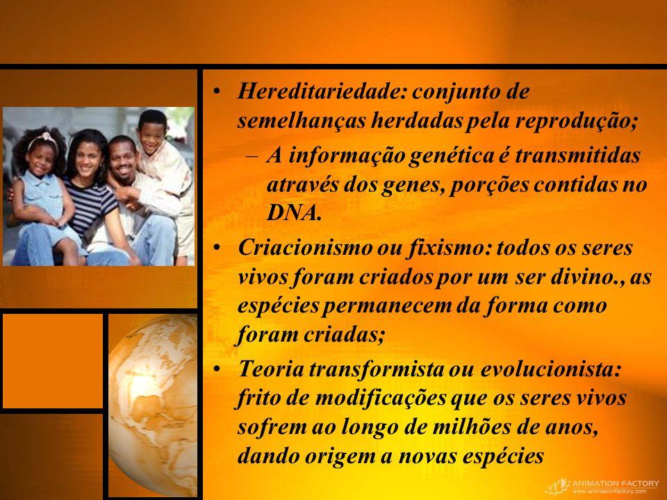 Hereditariedade: conjunto de semelhanças herdadas pela reprodução; –A informação genética é transmitidas através dos genes, porções contidas no DNA. C