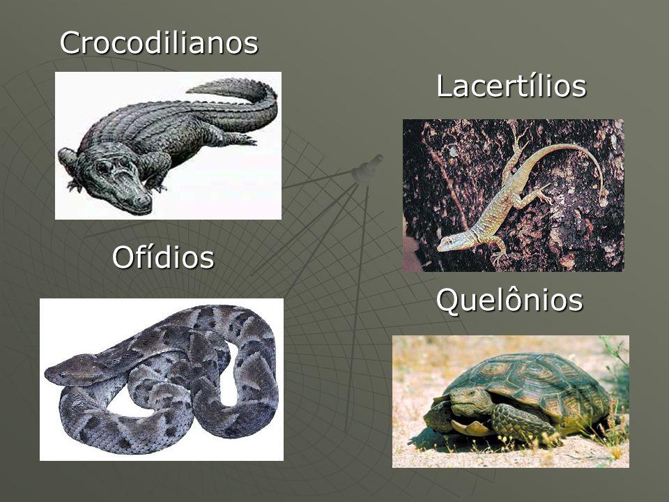 Crocodilianos Crocodilianos Lacertílios Lacertílios Ofídios Ofídios Quelônios Quelônios