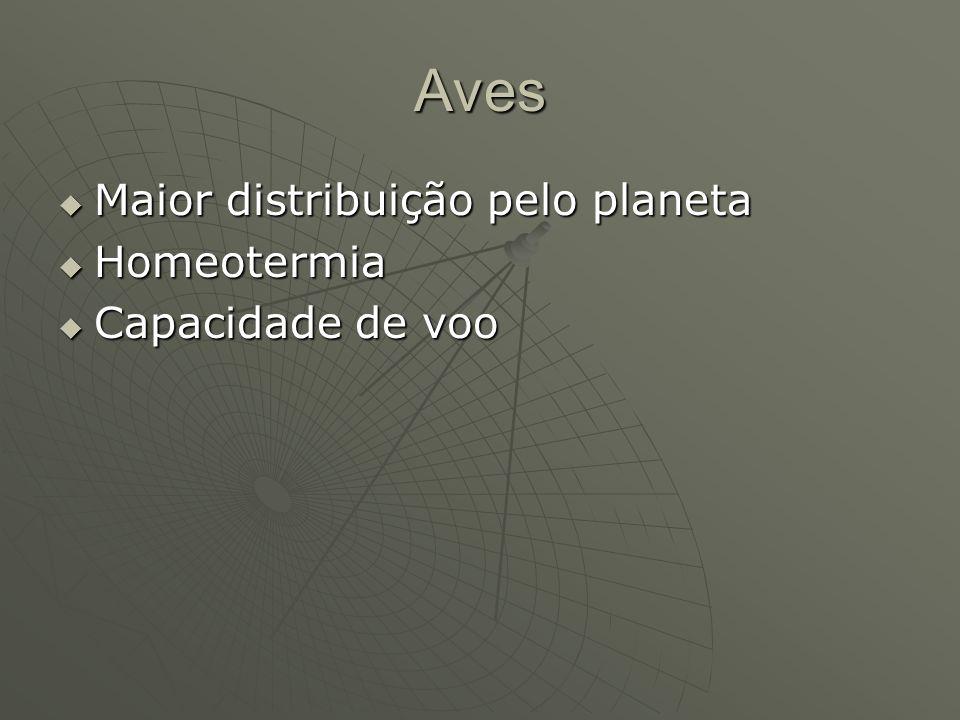Aves Maior distribuição pelo planeta Maior distribuição pelo planeta Homeotermia Homeotermia Capacidade de voo Capacidade de voo