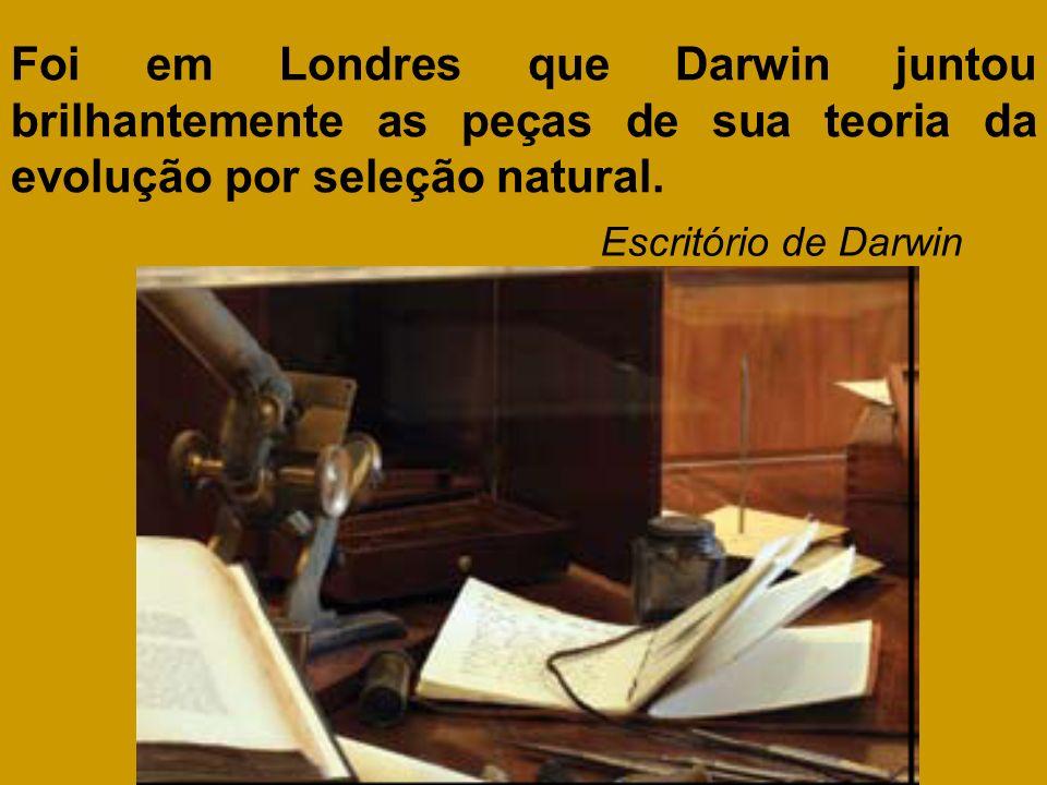 Foi em Londres que Darwin juntou brilhantemente as peças de sua teoria da evolução por seleção natural. Escritório de Darwin