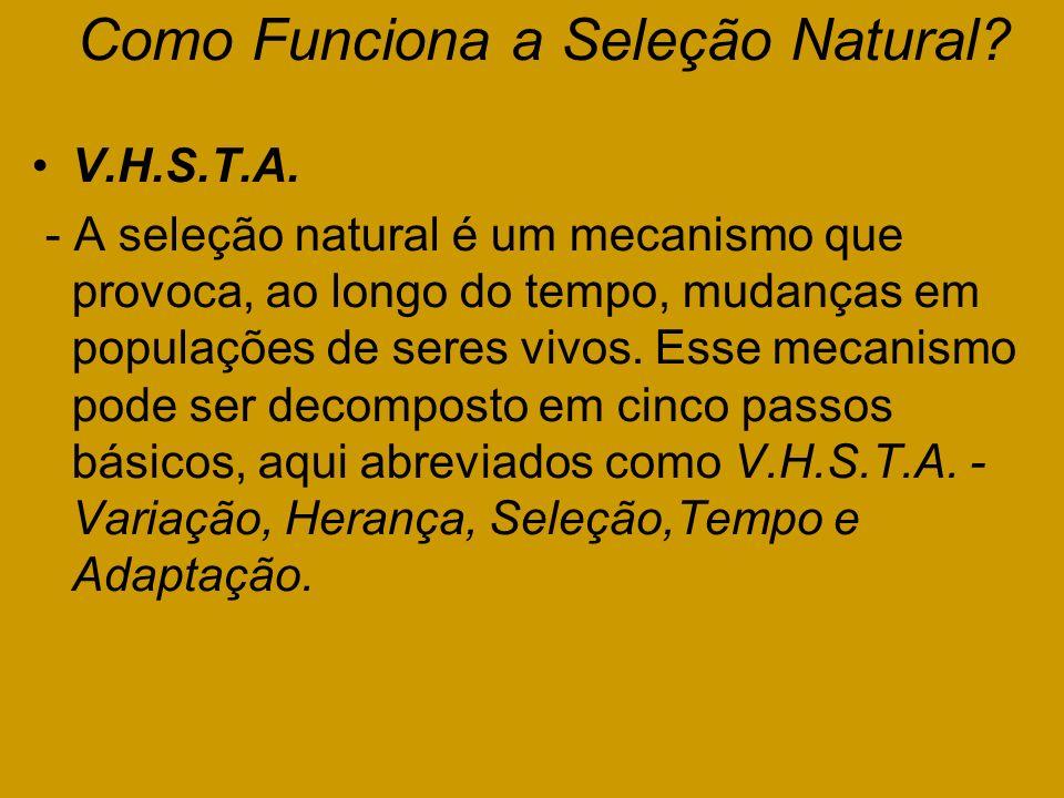 Como Funciona a Seleção Natural? V.H.S.T.A. - A seleção natural é um mecanismo que provoca, ao longo do tempo, mudanças em populações de seres vivos.