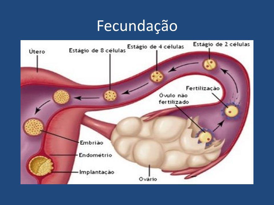 Anexos Embrionário Vesícula Vitelina: armazenamento de substâncias nutritivas