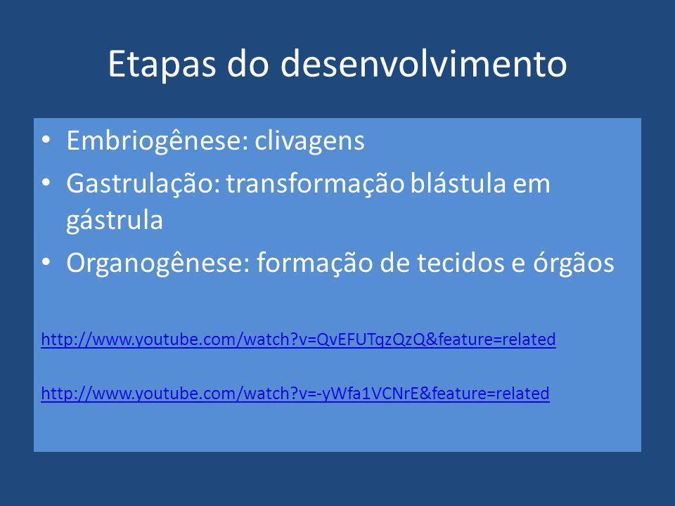 Etapas do desenvolvimento Embriogênese: clivagens Gastrulação: transformação blástula em gástrula Organogênese: formação de tecidos e órgãos http://ww