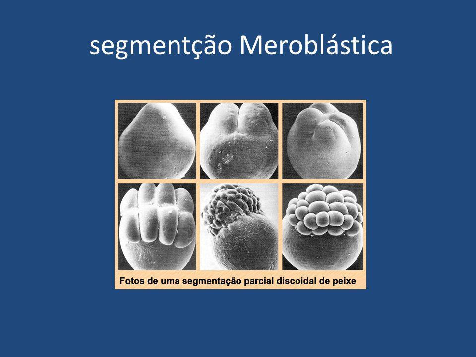 Gastrulação É o processo que compreende o processo de transformação da blástula em gástrula, ela caracteriza-se pela formação dos FOLHETOS EMBRIONÁRIOS