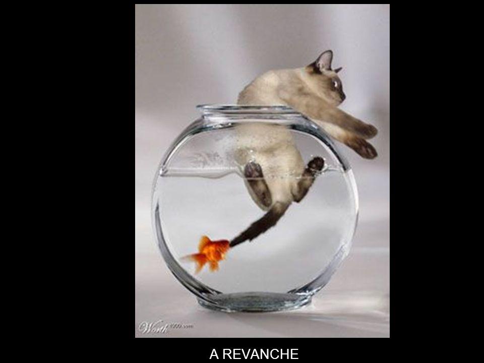 A REVANCHE