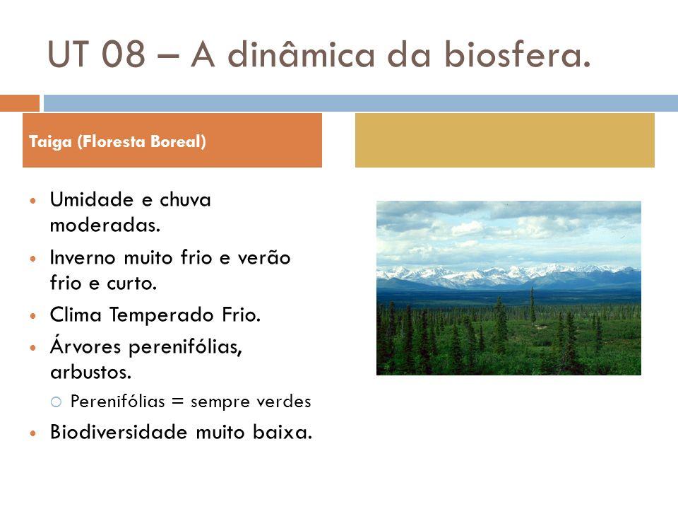Taiga (Floresta Boreal) Umidade e chuva moderadas. Inverno muito frio e verão frio e curto. Clima Temperado Frio. Árvores perenifólias, arbustos. Pere